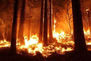 アマゾン熱帯雨林の火災は自然災害だけではない!その原因とは